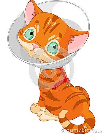 Больной милый котенок