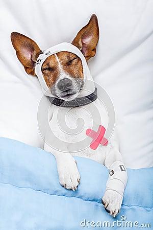 больной собаки
