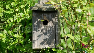Большая синица подавая детеныши в коробке гнезда видеоматериал