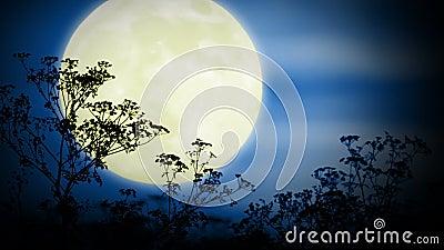 Большие луна и трава акции видеоматериалы