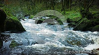 Большое река в старом лесе