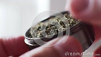 Бутоны марихуаны точильщика в супер макросе Культура куря бутонов конопли медицинских акции видеоматериалы