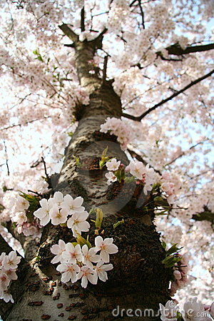 вал цветения