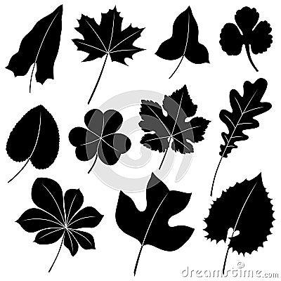 вектор листьев