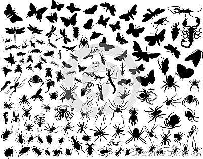 вектор насекомых