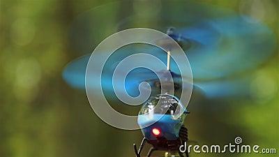 Вертолет Blue RC летает в воздухе в районе лесного парка HD видеоматериал