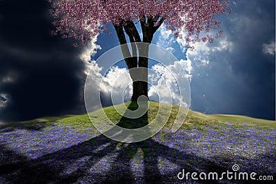 весна холма
