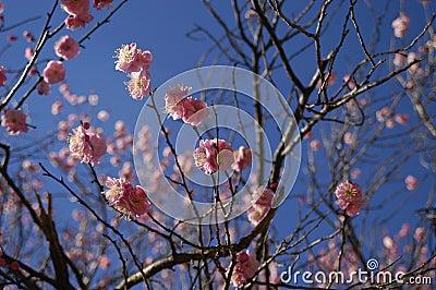 весна цветений