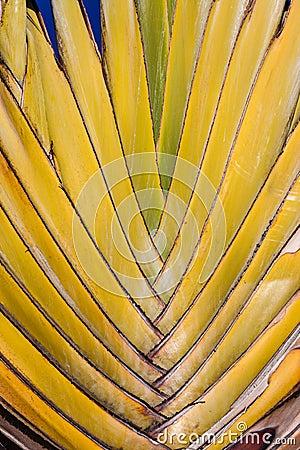 Ветви пальмы