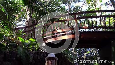 Взгляд под деревьями на парке джунглей акции видеоматериалы