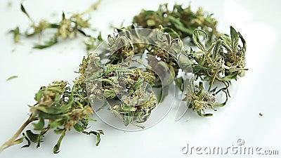 Видео про марихуана гидропоник выращивание конопли в домашних условиях