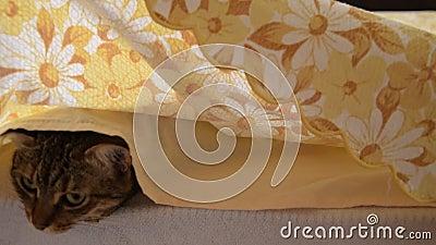 Вид спереди руки ` s женщины поднимает крышки кровати и находит кот сток-видео