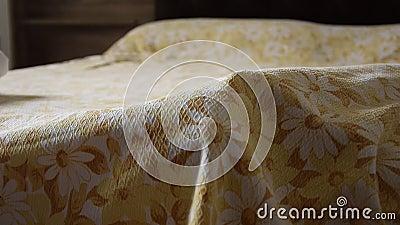Вид спереди руки ` s женщины поднимает крышки кровати и находит кот акции видеоматериалы