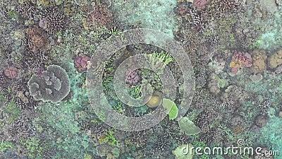 Вид с воздуха здоровых кораллов в радже Ampat видеоматериал