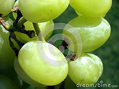 Виноградина 4