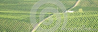 виноградник Британского Колумбии okanagan