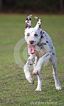 витальность собаки