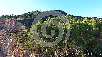 Вид с воздуха сосны горы трутня видеоматериал
