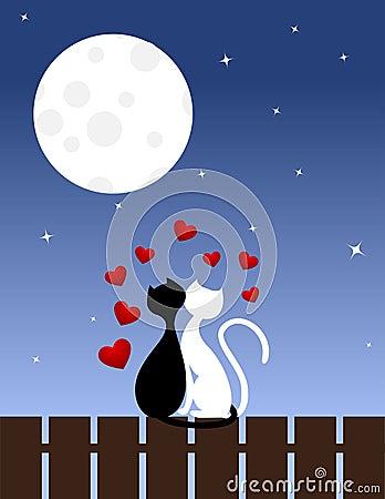 влюбленность котов
