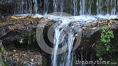 Водопад в Софиевском парке, Уман сток-видео