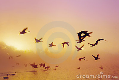 восход солнца озера d