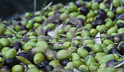 Выбранные оливки и листья