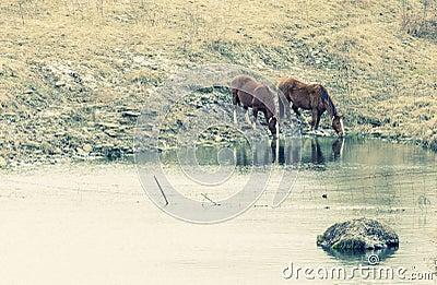 Выпивать лошадей