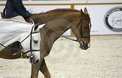 выставка 2007 лошади Редакционное Фотография