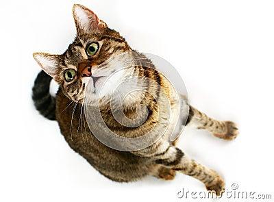 вытаращиться кота