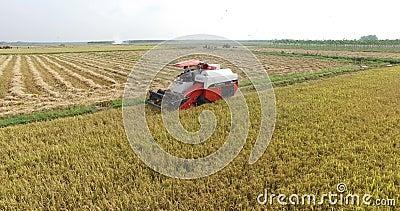 ВЬЕТНАМ, 15-ОЕ АПРЕЛЯ: Жатка зернокомбайна работая на поле сток-видео