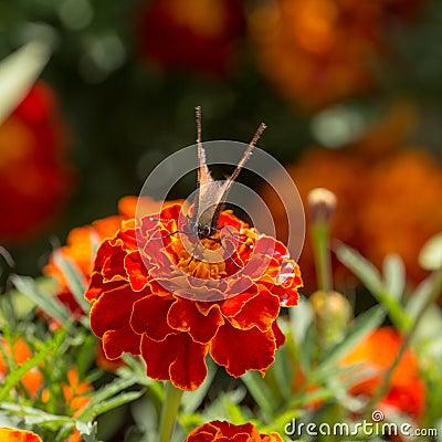 В саде лета