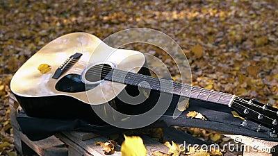 Гитара лежит в лесе на желтых листьях Падение листьев желтого цвета на гитару осенняя пуща сток-видео