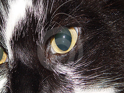 глаз кота s