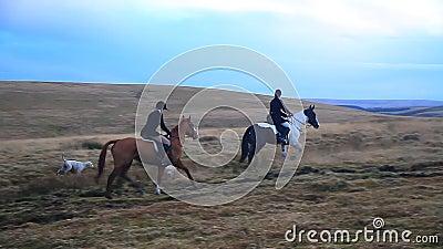 Гончие лошади и Fox, Dartmoor, Девон
