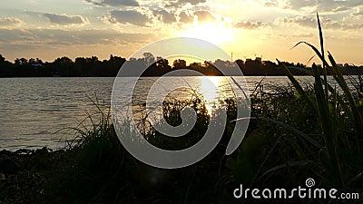 Грубый речной берег покрытый с зеленым заболоченным местом, тросточкой, Bulrush, на заходе солнца в 4k сток-видео