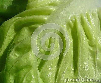 густолиственные овощи