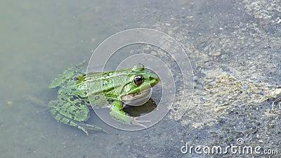 глубина eyed вода вала красного отражения лягушки фокуса поля глаз отмелая сток-видео