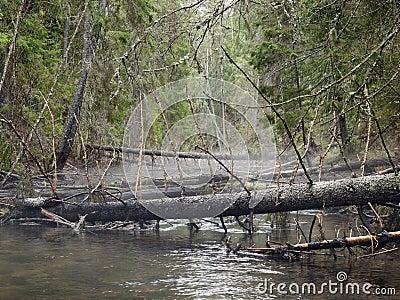 Глубокий лес