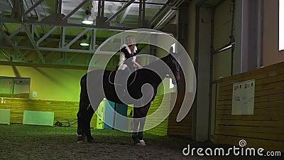 Девушка лошади и штриховать ее руку пока положение лошади крыто сток-видео