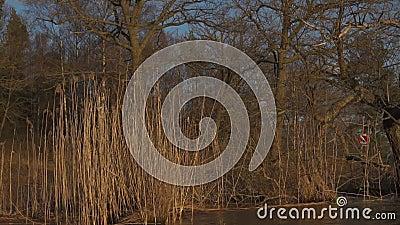 Деревья и вегетация озера во время часа захода солнца сток-видео