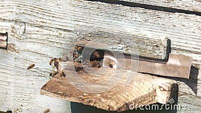 Деревянный вход в ульи с летающими пчелами видеоматериал