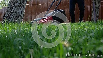 Домовладелец работая в саде использует травокосилку для того чтобы накосить лужайку Человек режа траву в его дворе с электрическо сток-видео