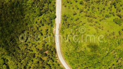 Дорога между джунглями и пальмами видеоматериал