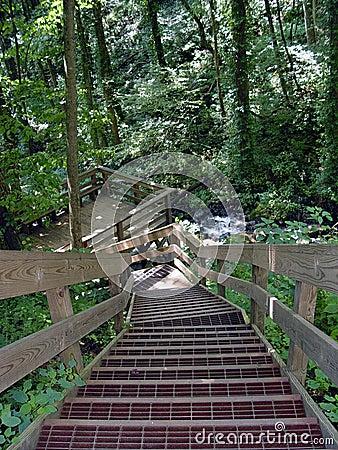 древесины лестниц