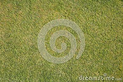 Естественная трава