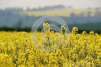 желтый цвет весны