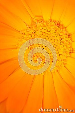 желтый цвет цветка
