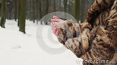 Женщина в пальто шерсти Девушки пробуют нагревать замерзая руки видеоматериал