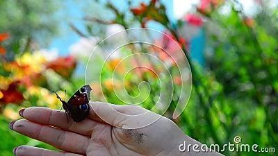 Женщина освобождает бабочку от ее руки сток-видео