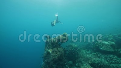 Женщина-халявщик, плавающая в голубом океане с тропическими рыбами и кораллами сток-видео